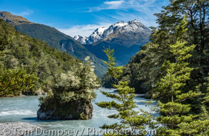 Hedin Peak rises above a tree-dotted island in Dart River on Rees-Dart Track. Mount Aspiring NP, New Zealand.
